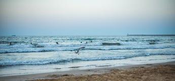 在海滩的全景日落 库存图片