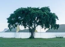 在海滩的印度榕树 图库摄影