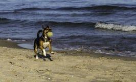 在海滩的取指令 免版税库存图片