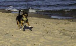 在海滩的取指令 库存照片