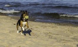 在海滩的取指令 免版税库存照片