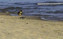 在海滩的取指令 库存图片