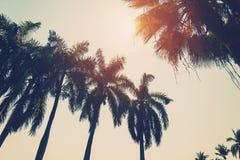 在海滩的可可椰子树在与葡萄酒作用的夏天 库存照片