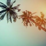 在海滩的可可椰子树在与葡萄酒作用的夏天 免版税库存照片