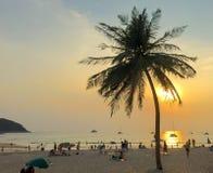 在海滩的可可椰子树在日落 免版税库存照片