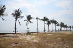 在海滩的可可椰子树海 免版税库存照片
