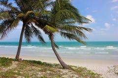 在海滩的可可椰子树 免版税库存图片