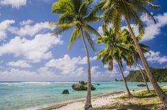 在海滩的可可椰子树 图库摄影