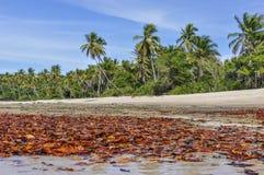 在海滩的叶子,在Boipeba海岛萨尔瓦多,巴西 图库摄影