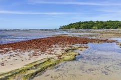 在海滩的叶子,在Boipeba海岛萨尔瓦多,巴西 免版税库存照片