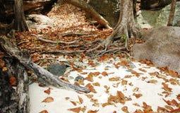 在海滩的叶子 图库摄影