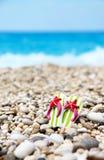 在海滩的啪嗒啪嗒的响声 图库摄影