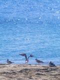 在海滩的四只海鸥在海附近 图库摄影