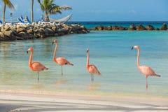 在海滩的四群火鸟 免版税图库摄影