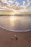 在海滩的壳在万达队 库存图片