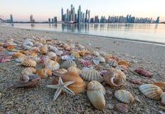 在海滩的壳在摩天大楼背景  免版税库存图片