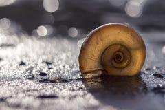 在海滩的壳在落日的背后照明光芒 库存图片