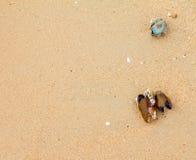 在海滩的壳淡菜 图库摄影
