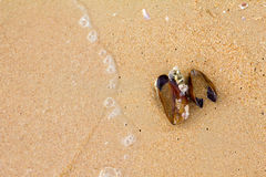 在海滩的壳淡菜 库存照片