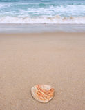 在海滩的壳 免版税库存图片