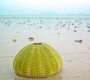 在海滩的壳 库存图片