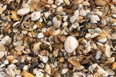 在海滩的壳 免版税图库摄影