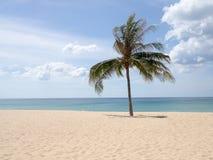 在海滩的夏时 在一个白色沙子海滩的绿色椰子树在Kata海滩,普吉岛,泰国 库存图片