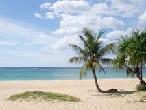 在海滩的夏时 在一个白色沙子海滩的绿色椰子树在Kata海滩,普吉岛,泰国 免版税库存图片