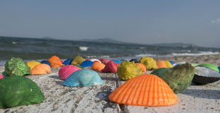 在海滩的多彩多姿的贝壳 图库摄影
