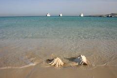 在海滩的大巧克力精炼机贝壳 库存照片