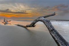在海滩的大树枝 库存图片