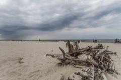 在海滩的大树枝 免版税库存照片