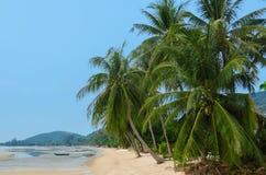 在海滩的大棕榈树 免版税库存图片