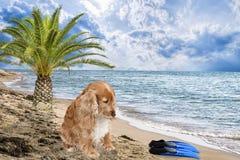 在海滩的孑然 免版税库存图片