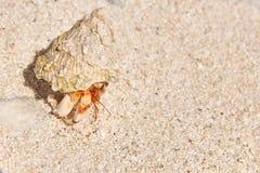 在海滩的寄居蟹一个热带海岛 库存照片