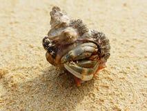 在海滩的寄居蟹, Onna,冲绳岛 免版税库存照片