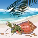在海滩的寄居蟹 库存图片