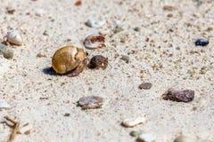 在海滩的寄居蟹 免版税图库摄影
