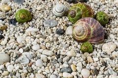 在海滩的小卵石与五颜六色的蜗牛壳 免版税库存照片