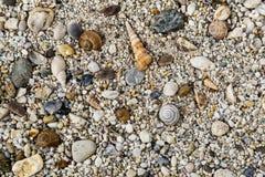 在海滩的小卵石与壳 免版税图库摄影