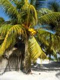 在海滩的小屋在墨西哥 免版税库存照片