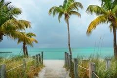 在海滩的小径向有棕榈树的美丽的绿色海洋 免版税图库摄影