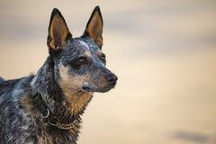在海滩的小狗 库存照片