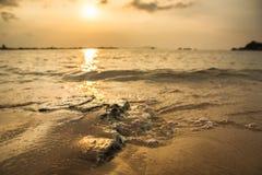 在海滩的小的场面 免版税库存照片