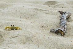 在海滩的小的螃蟹 免版税图库摄影