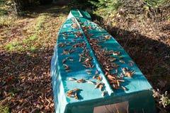 在海滩的小船在秋天森林里,加拿大 免版税库存照片