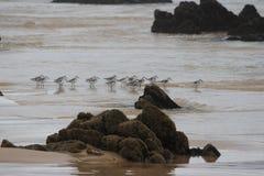 在海滩的小鸟 免版税库存照片