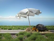 在海滩的小绿海龟 旅游业概念假期 免版税库存图片