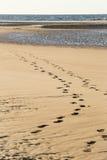在海滩的岸的脚步 库存照片