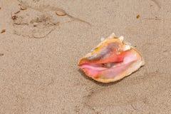 在海滩的巧克力精炼机壳 免版税库存图片